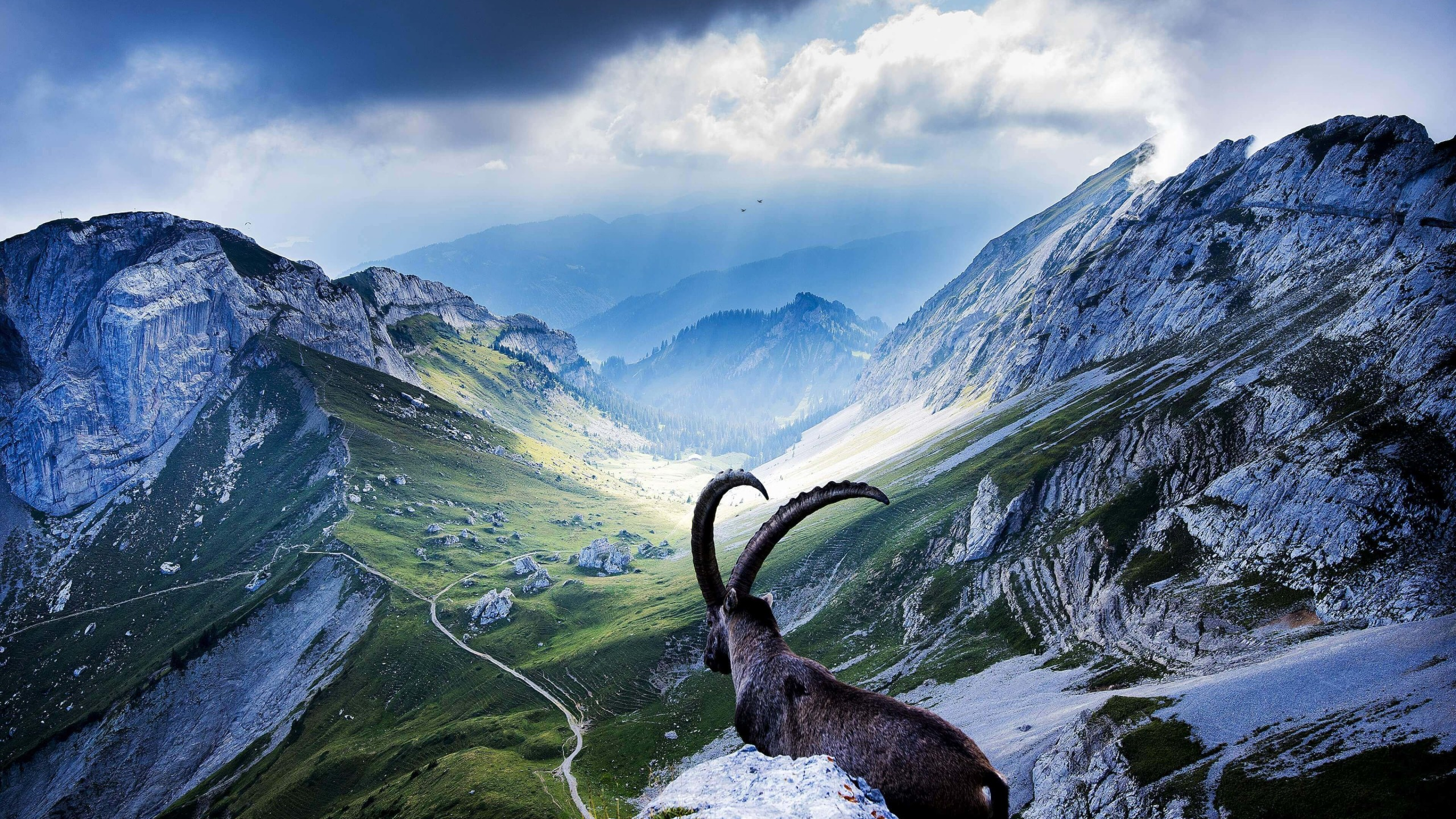 Goat at Pilatus, Switzerland Wallpaper for Desktop 2560x1440