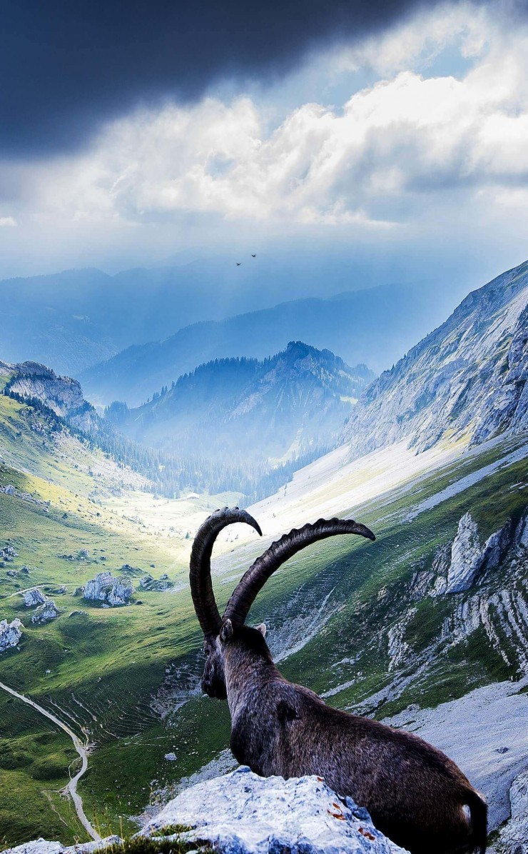 Goat at Pilatus, Switzerland Wallpaper for Apple iPhone 4 / 4s