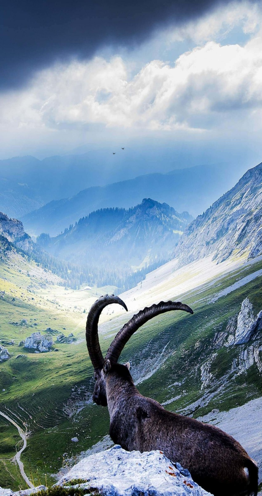 Goat at Pilatus, Switzerland Wallpaper for Apple iPhone 6 / 6s