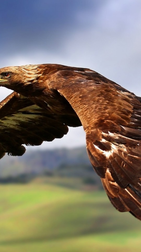 Golden Eagle Flying Wallpaper for SAMSUNG Galaxy S4 Mini