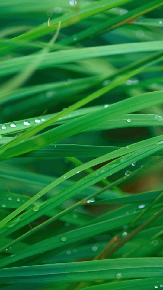 Green Blades Of Grass Wallpaper for LG G2 mini