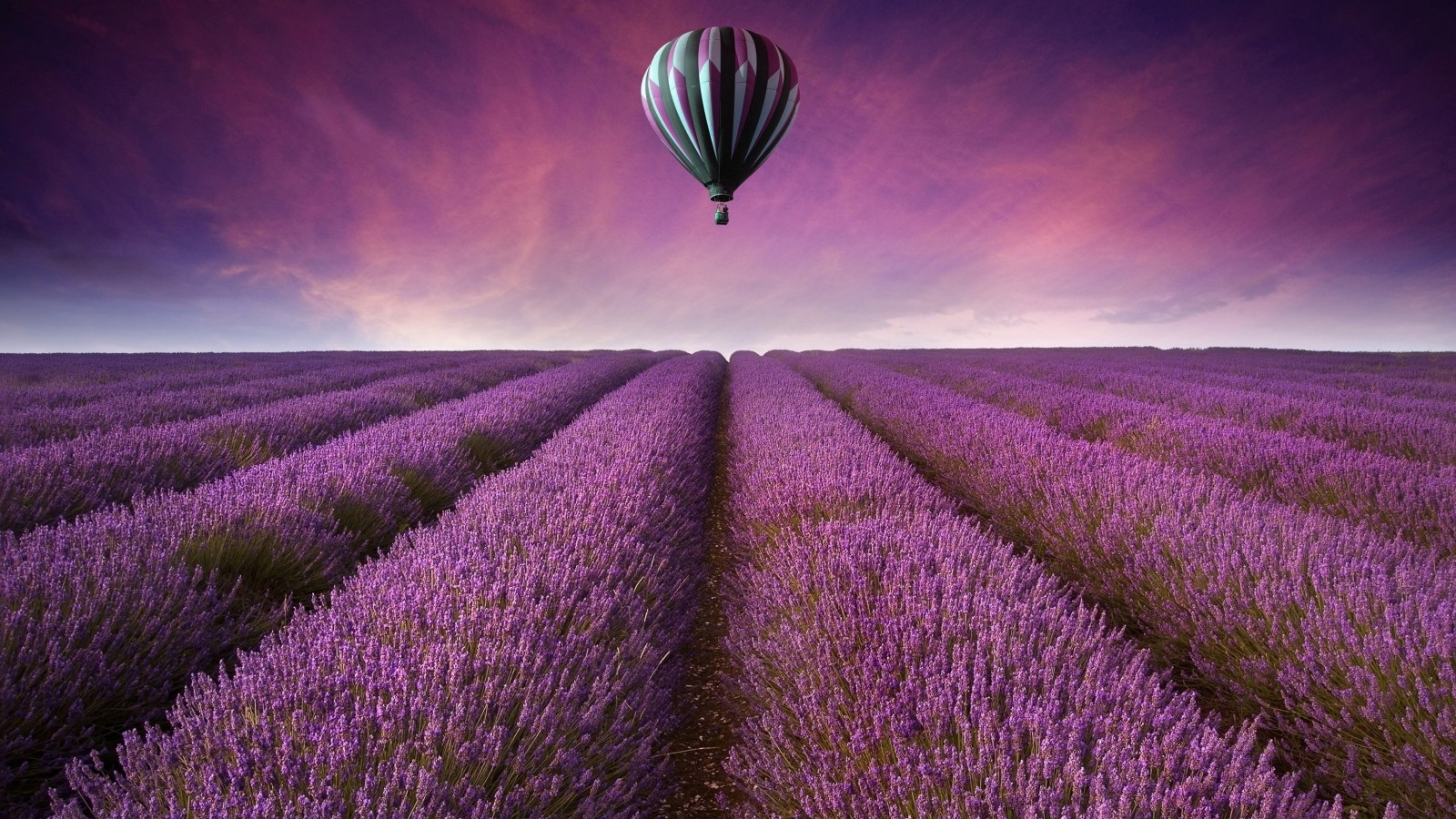 Hot Air Balloon Over Lavender Field Wallpaper for Desktop 1600x900