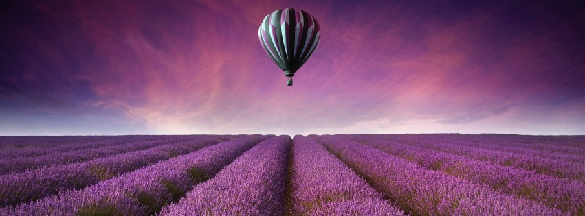 Hot Air Balloon Over Lavender Field HD Wallpaper For