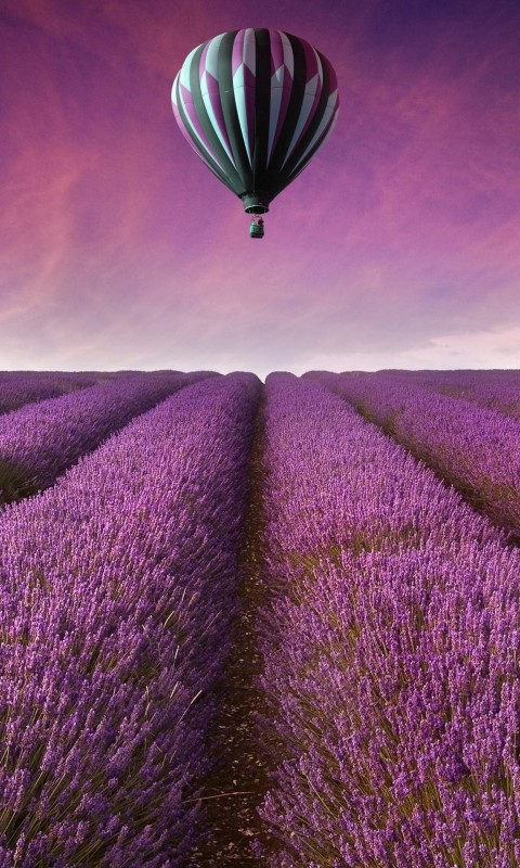 Hot Air Balloon Over Lavender Field Wallpaper for HTC Desire HD