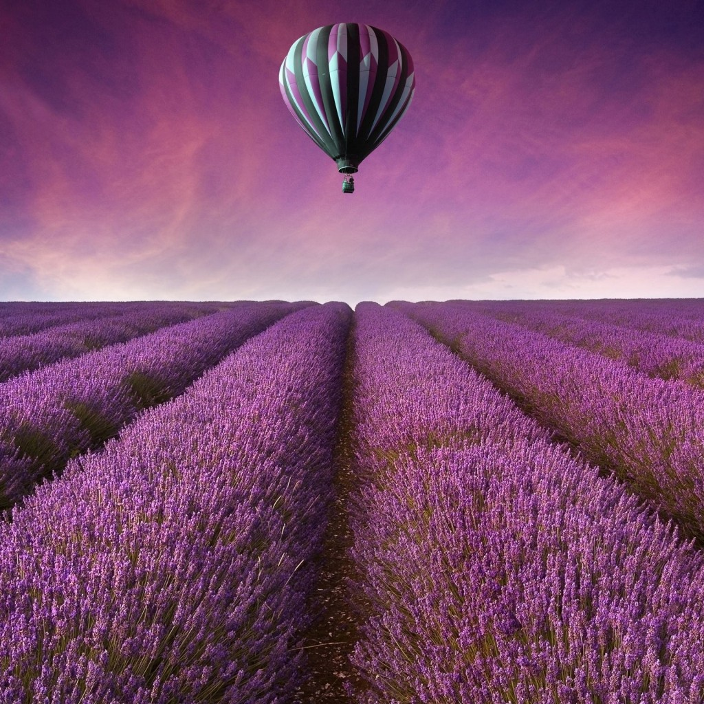 Hot Air Balloon Over Lavender Field Wallpaper for Apple iPad