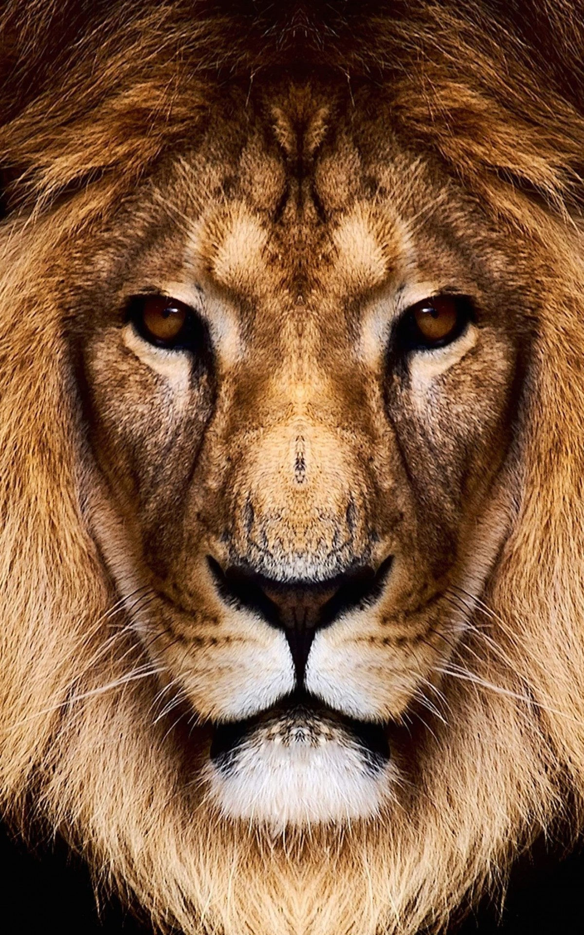 King Lion Wallpaper for Amazon Kindle Fire HDX