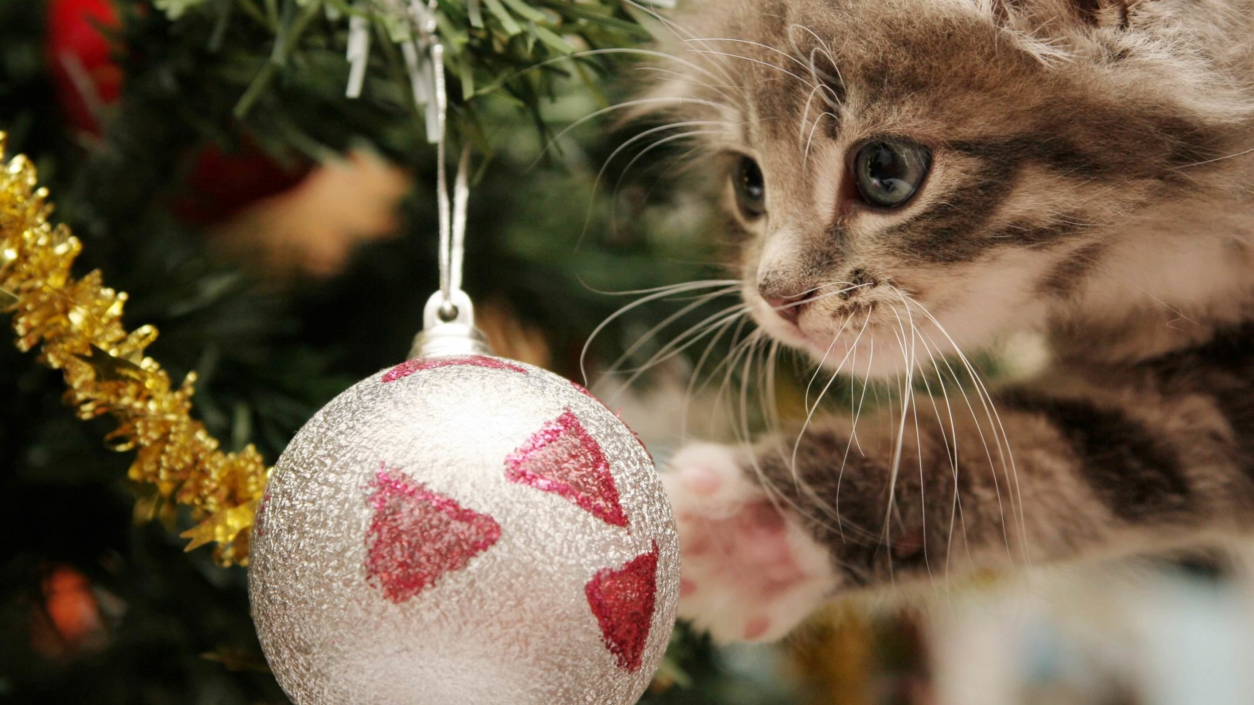 Kitten Playing With Christmas Ornaments Wallpaper for Desktop 2560x1440