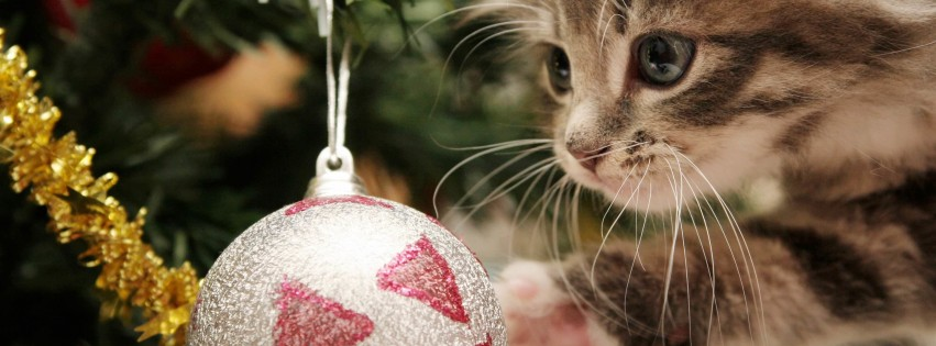 Kitten Playing With Christmas Ornaments Wallpaper for Social Media Facebook Cover