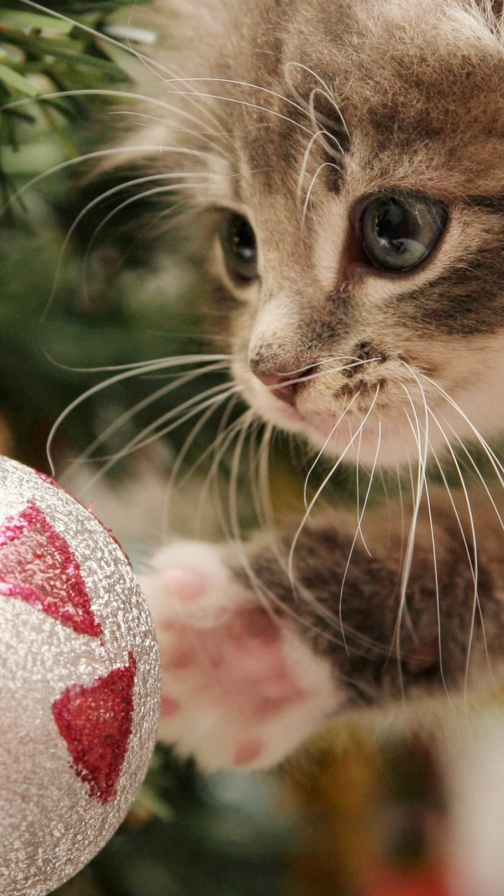 Kitten Playing With Christmas Ornaments Wallpaper for SAMSUNG Galaxy S3