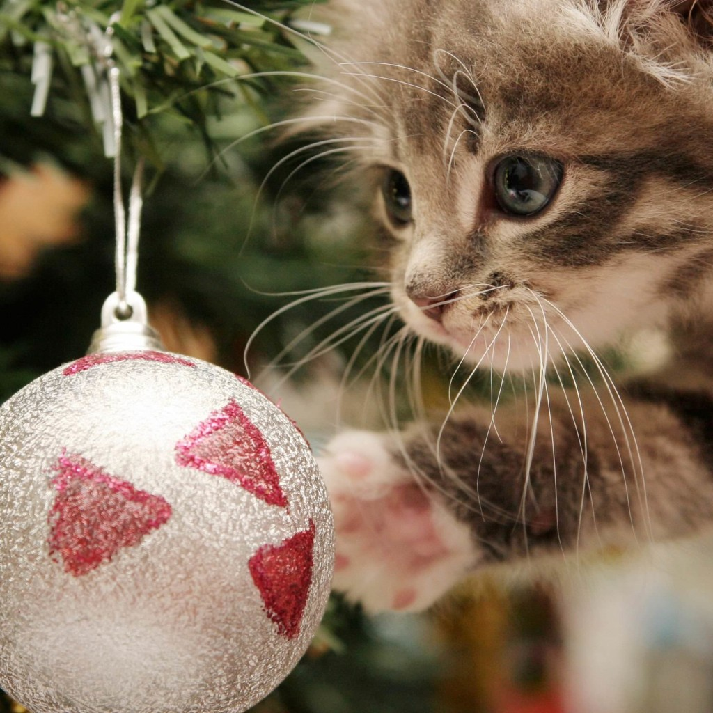 Kitten Playing With Christmas Ornaments Wallpaper for Apple iPad 2