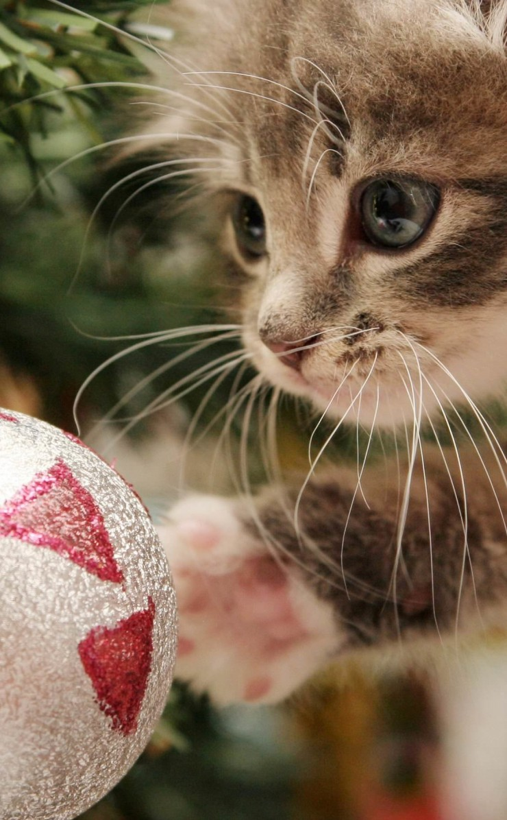 Kitten Playing With Christmas Ornaments Wallpaper for Apple iPhone 4 / 4s