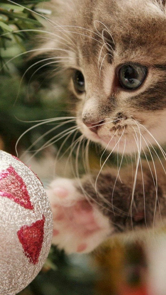 Kitten Playing With Christmas Ornaments Wallpaper for LG G2 mini