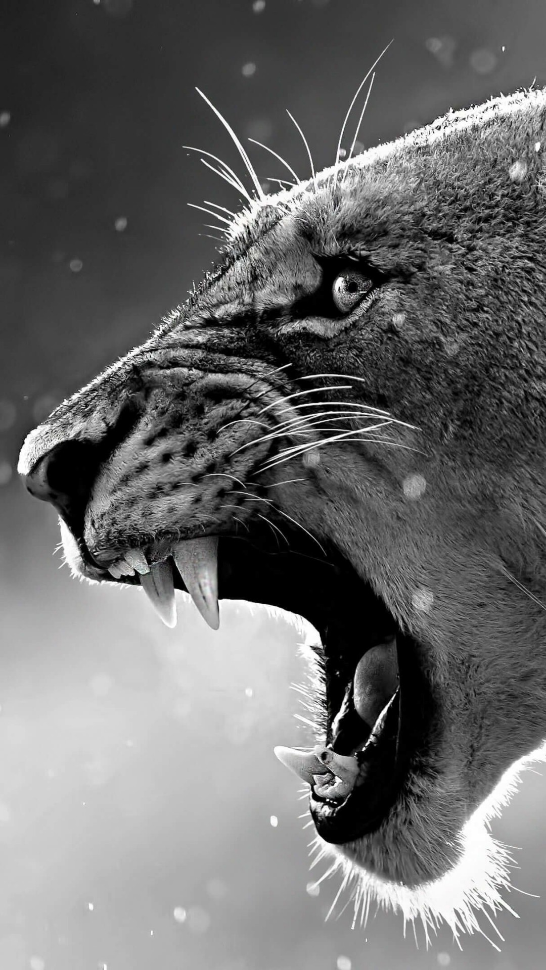 Lioness in Black & White Wallpaper for HTC One
