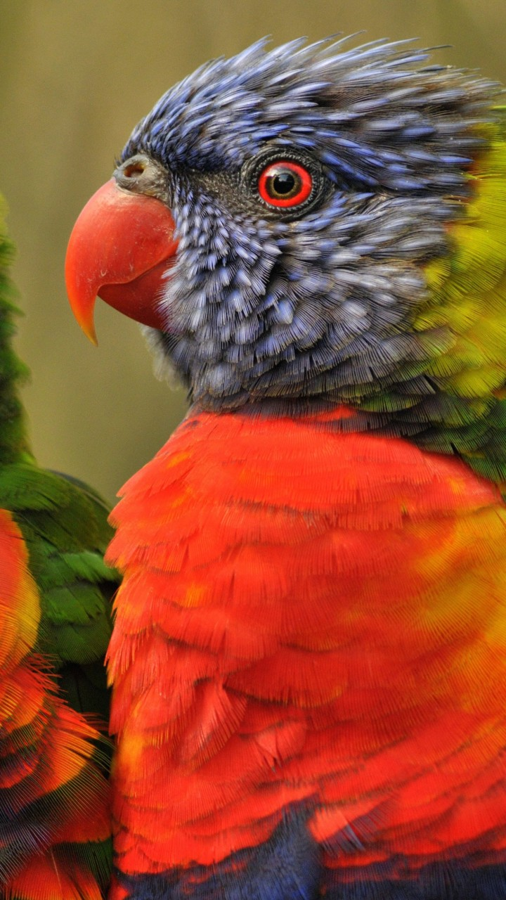 Lovebirds Wallpaper for SAMSUNG Galaxy Note 2