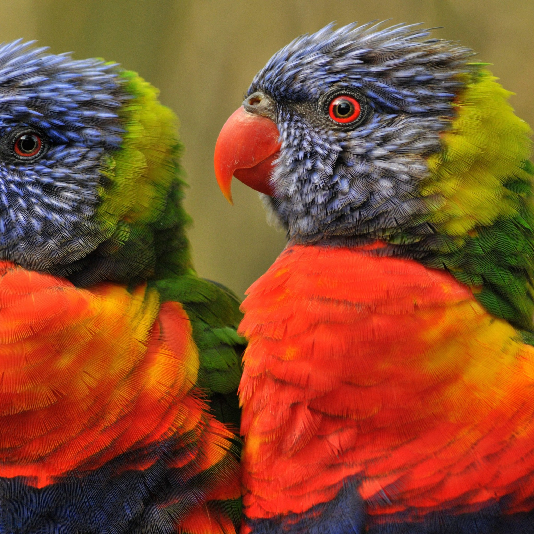Lovebirds Wallpaper for Google Nexus 9