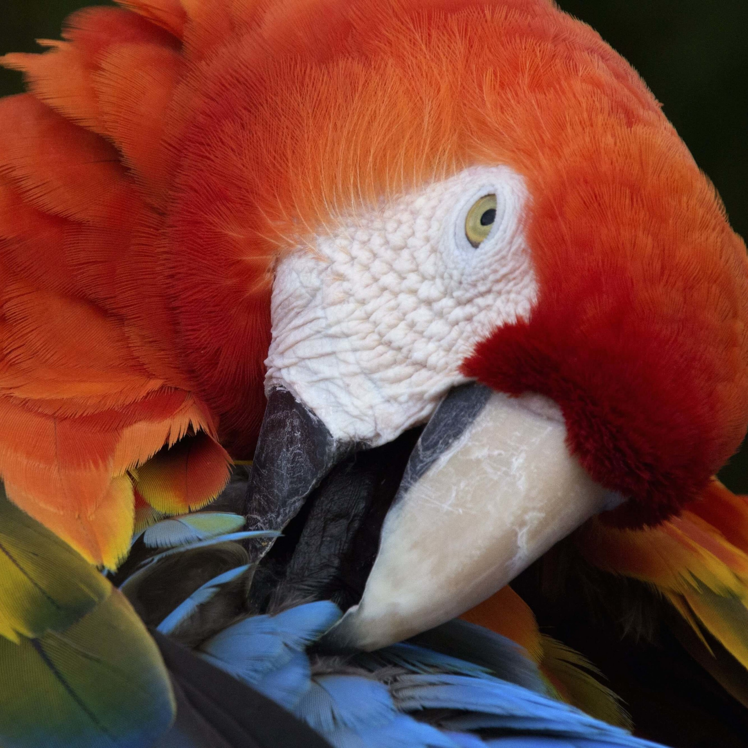 Macaw Parrot Wallpaper for Apple iPad 4