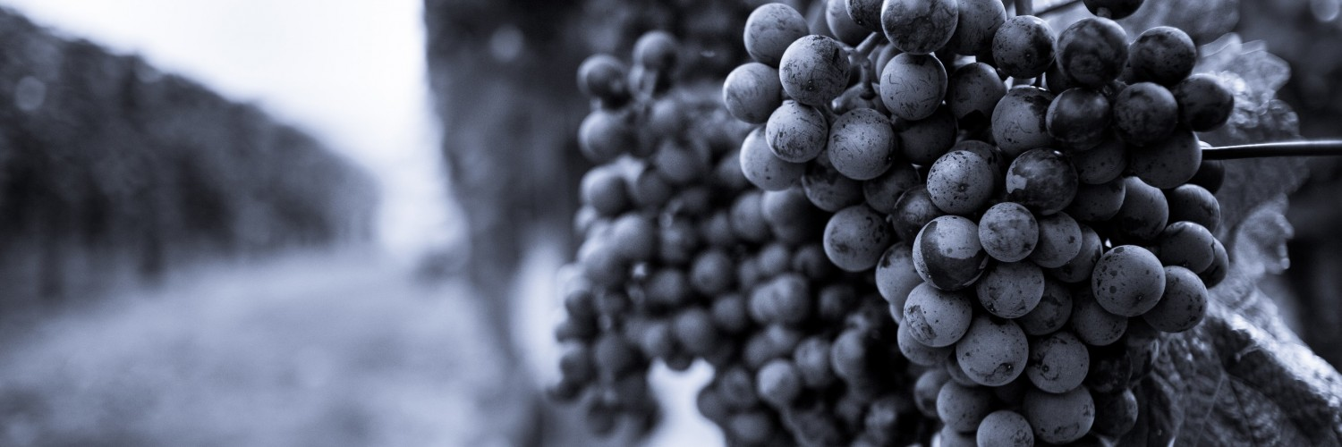 Monochrome Grape Plantation Wallpaper for Social Media Twitter Header