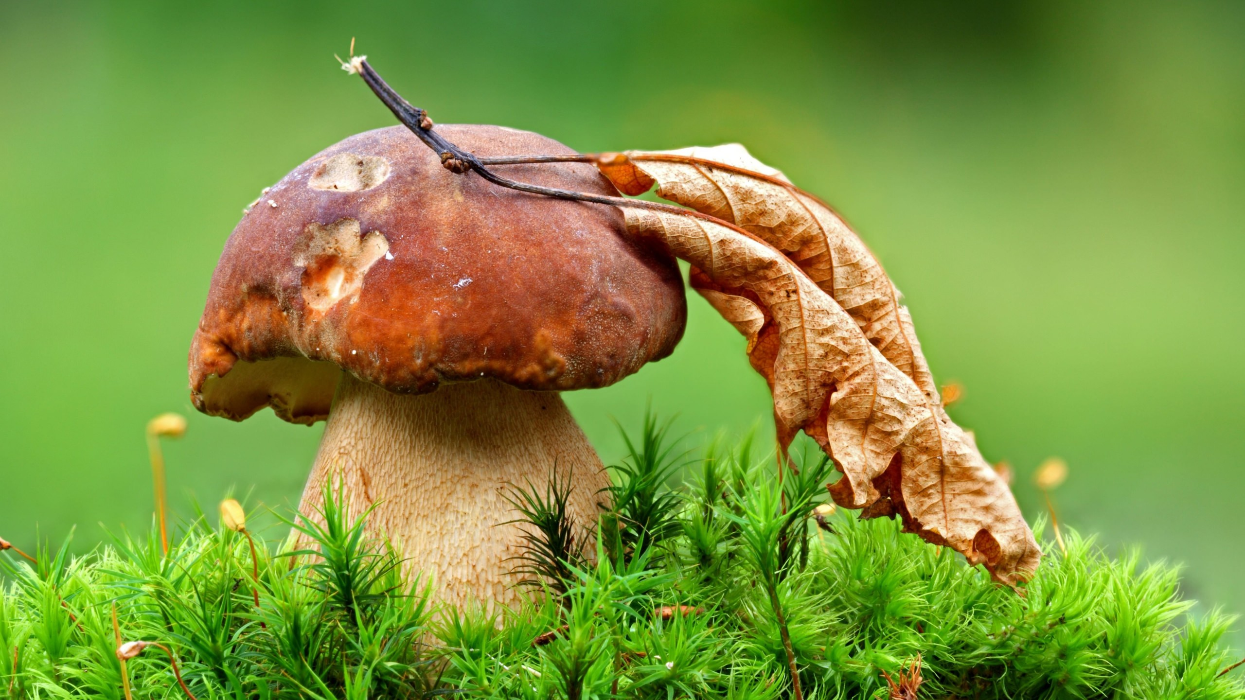 Mushroom Wallpaper for Desktop 2560x1440