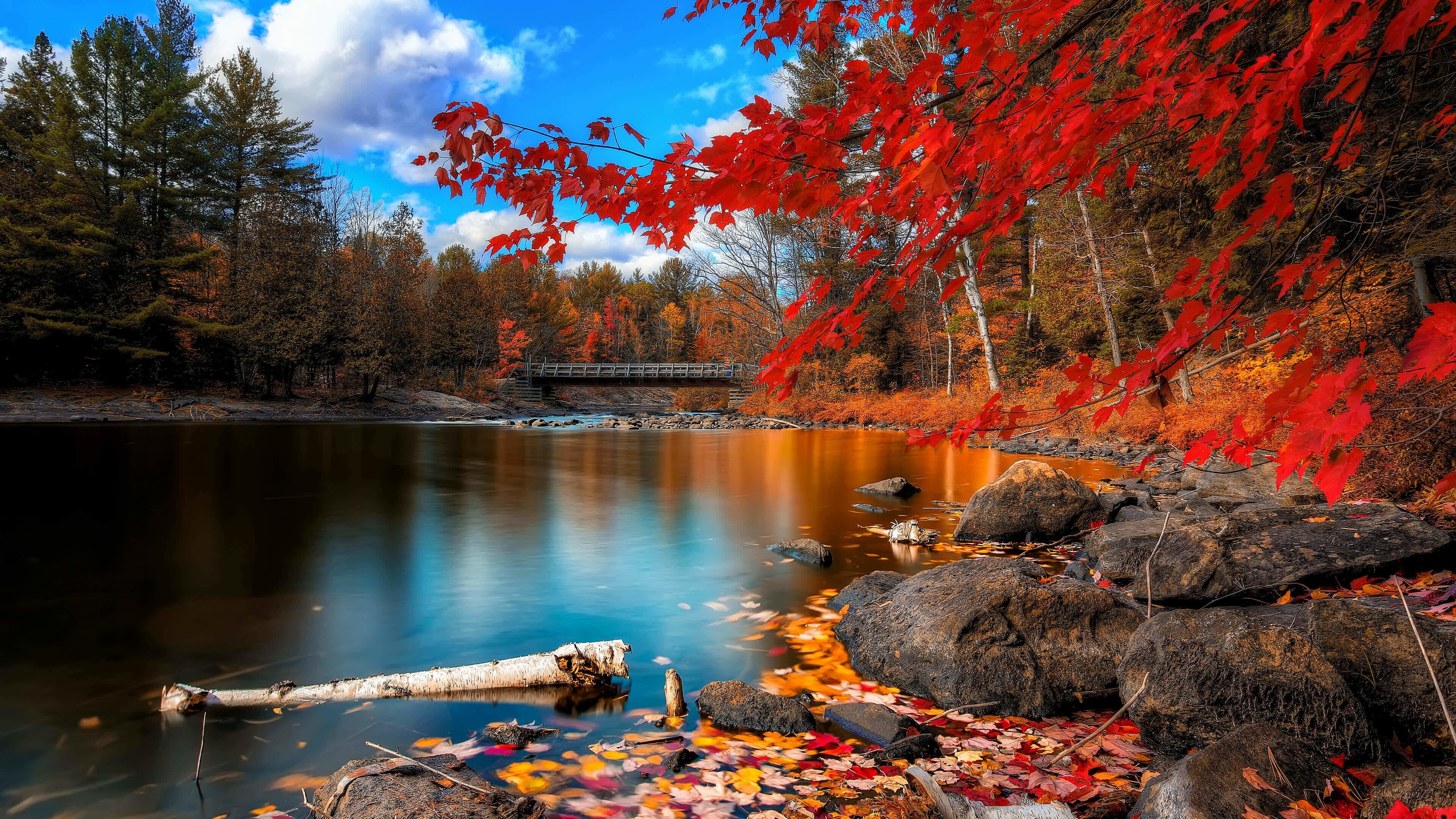 Oxtongue River, Algonquin Park Wallpaper for Desktop 4K 3840x2160