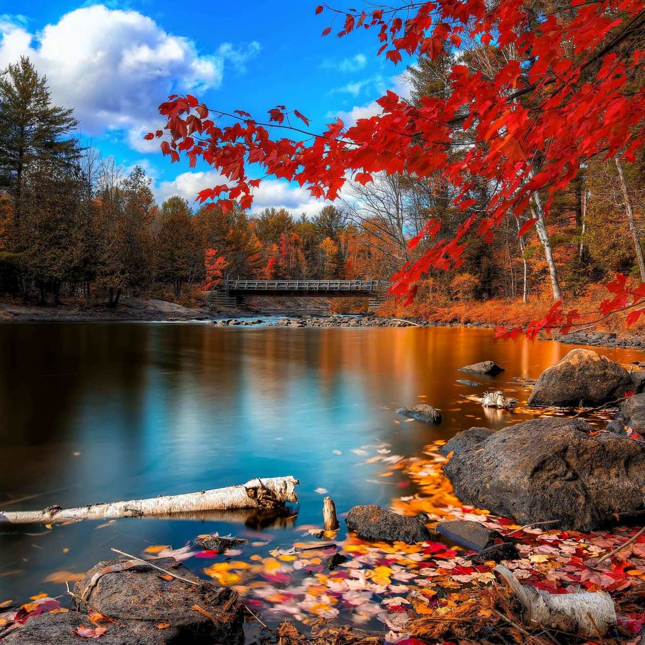 Oxtongue River, Algonquin Park Wallpaper for Apple iPad mini
