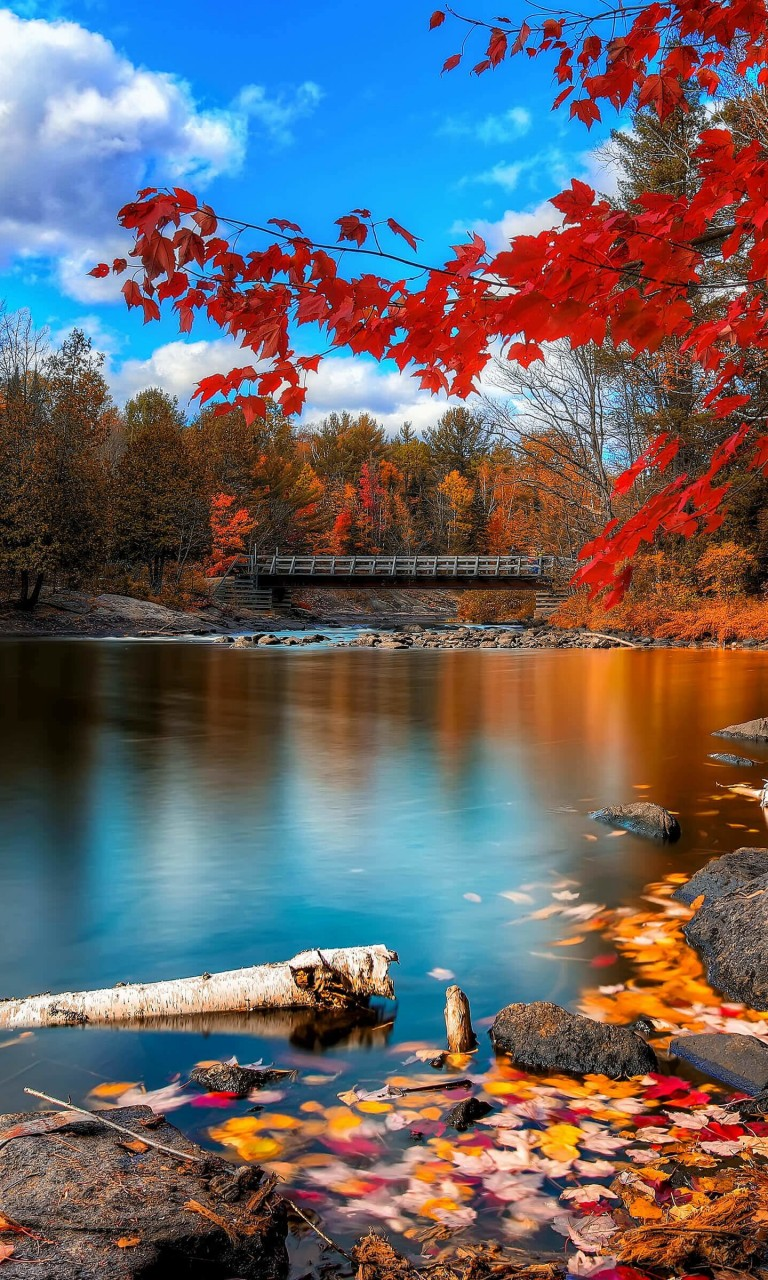 Oxtongue River, Algonquin Park Wallpaper for LG Optimus G