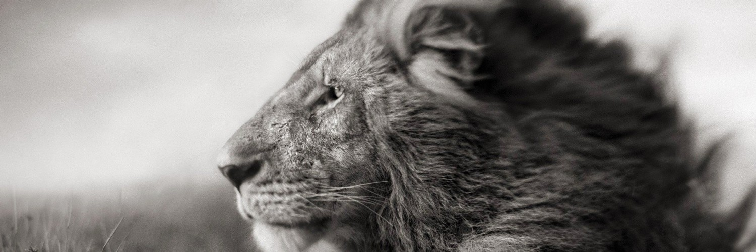 Portrait Of A Lion In Black And White Wallpaper for Social Media Twitter Header