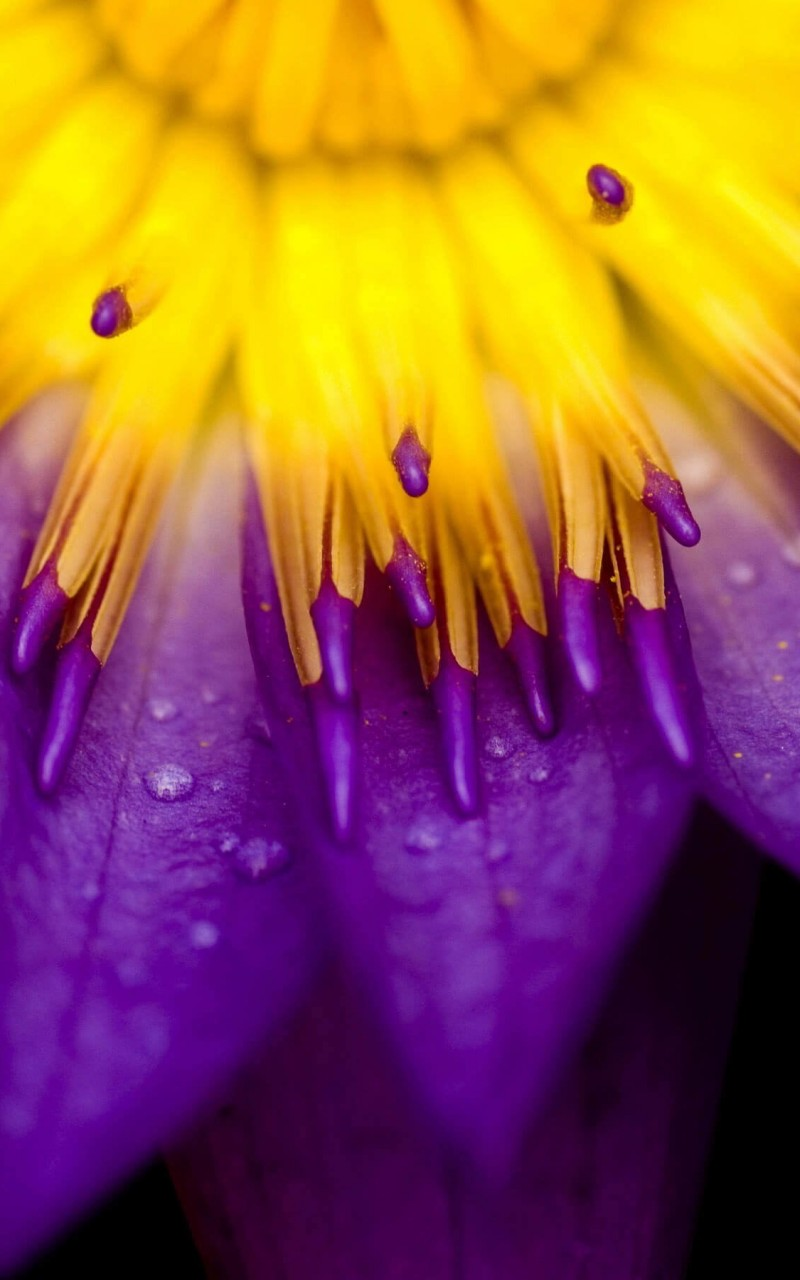 flower wallpaper for kindle fire - photo #11