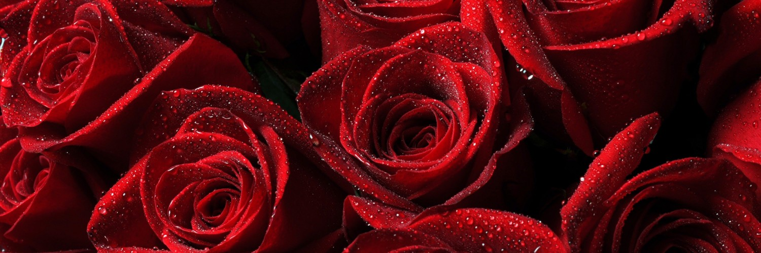 Red Roses Wallpaper for Social Media Twitter Header