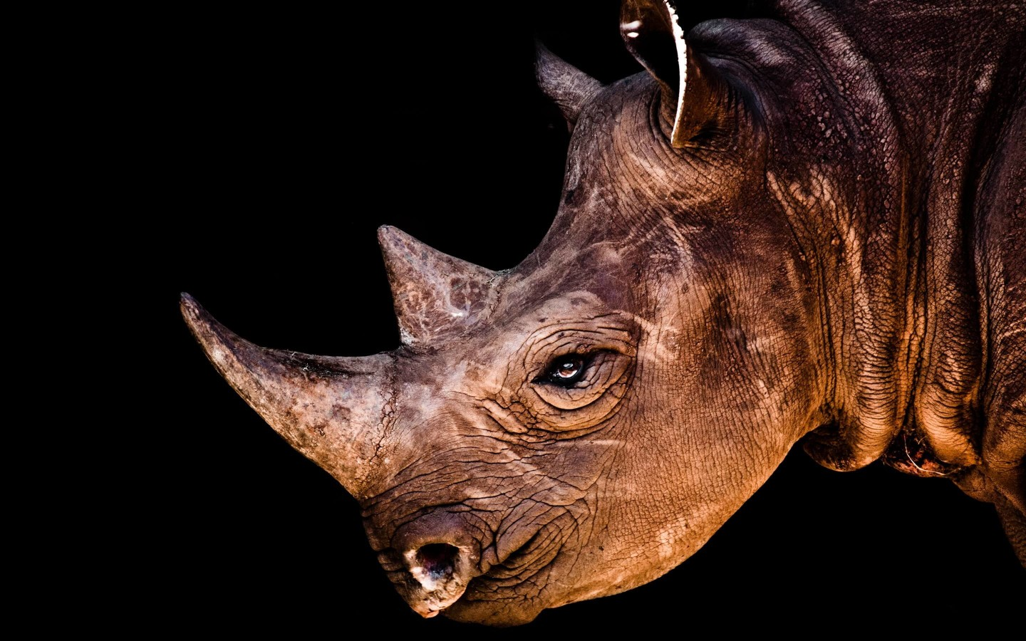 Rhinoceros Portrait Wallpaper for Desktop 1440x900