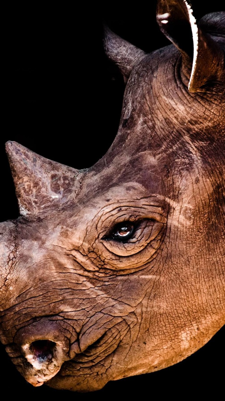 Rhinoceros Portrait Wallpaper for SAMSUNG Galaxy S3
