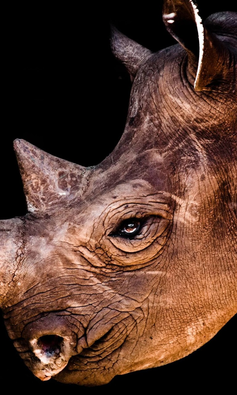 Rhinoceros Portrait Wallpaper for Google Nexus 4