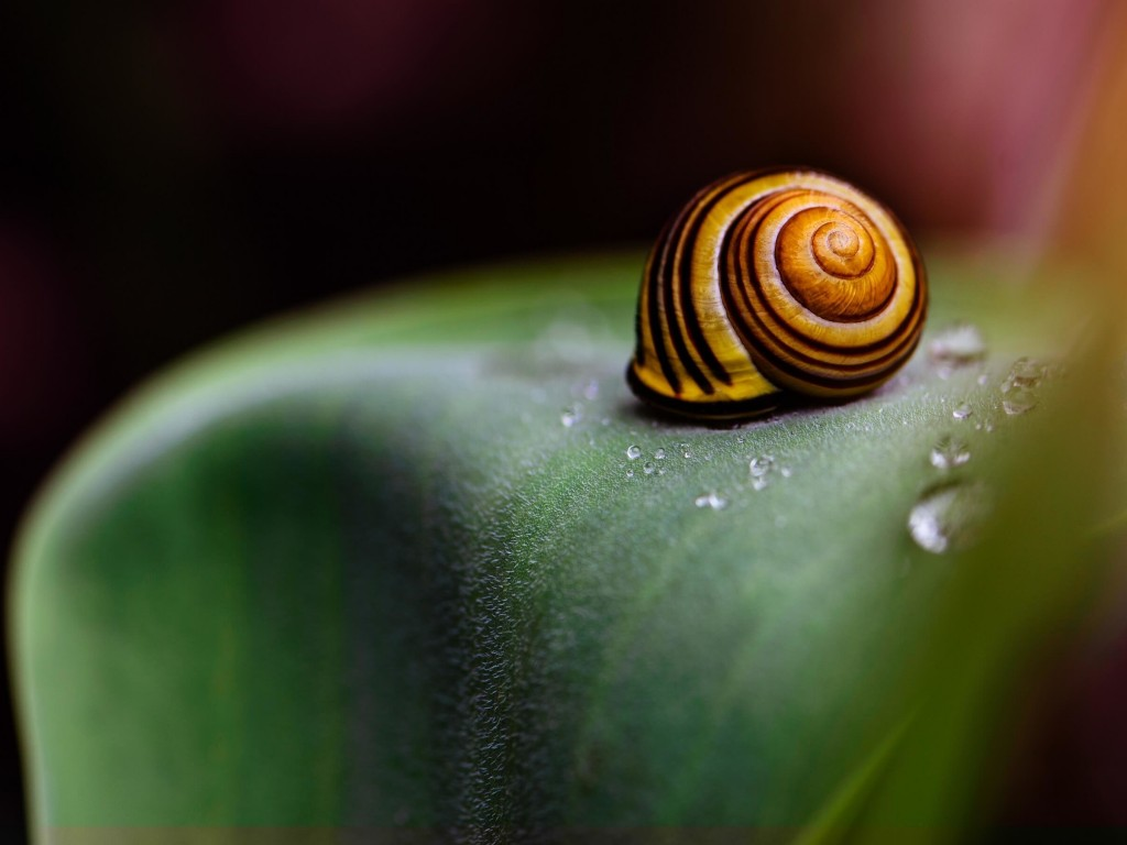 Snail Shell Wallpaper for Desktop 1024x768