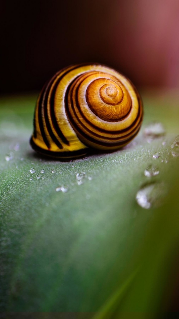Snail Shell Wallpaper for HTC One mini