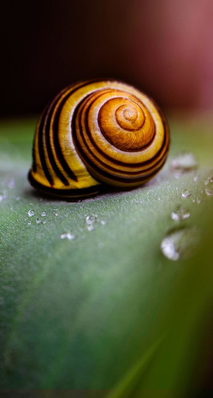 Snail Shell Wallpaper for Apple iPhone 5 / 5s