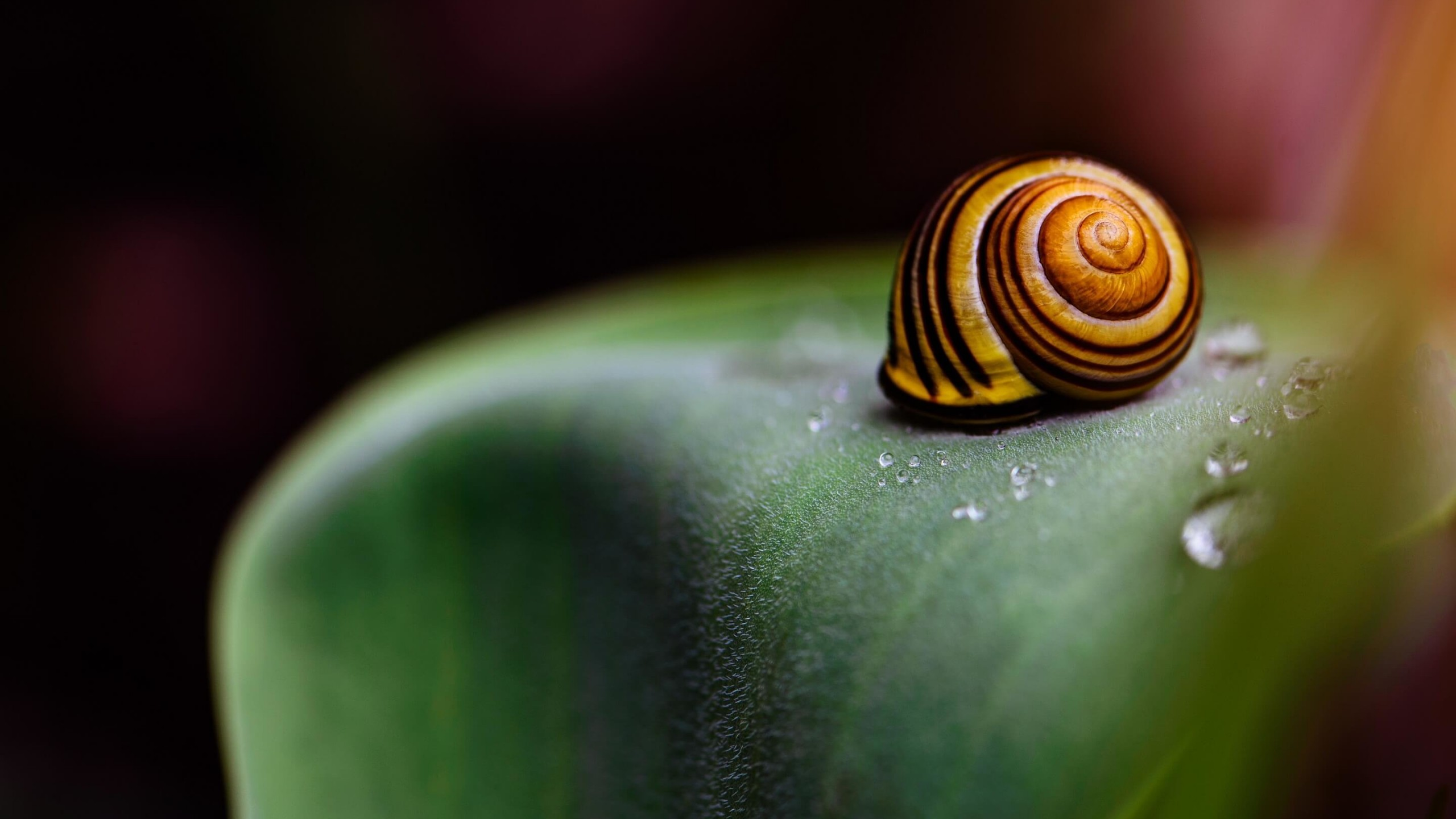 Snail Shell Wallpaper for Social Media YouTube Channel Art