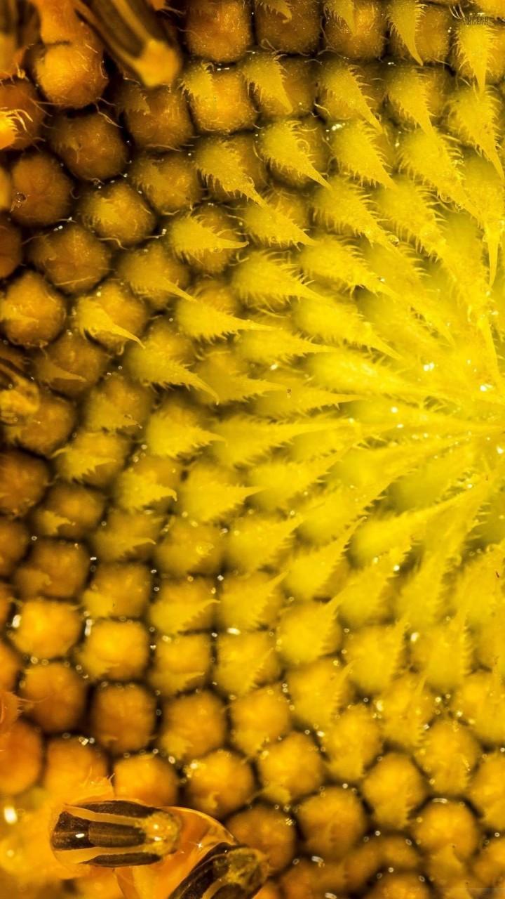 Sunflower Macro HD wallpaper for Redmi 1S screens ...