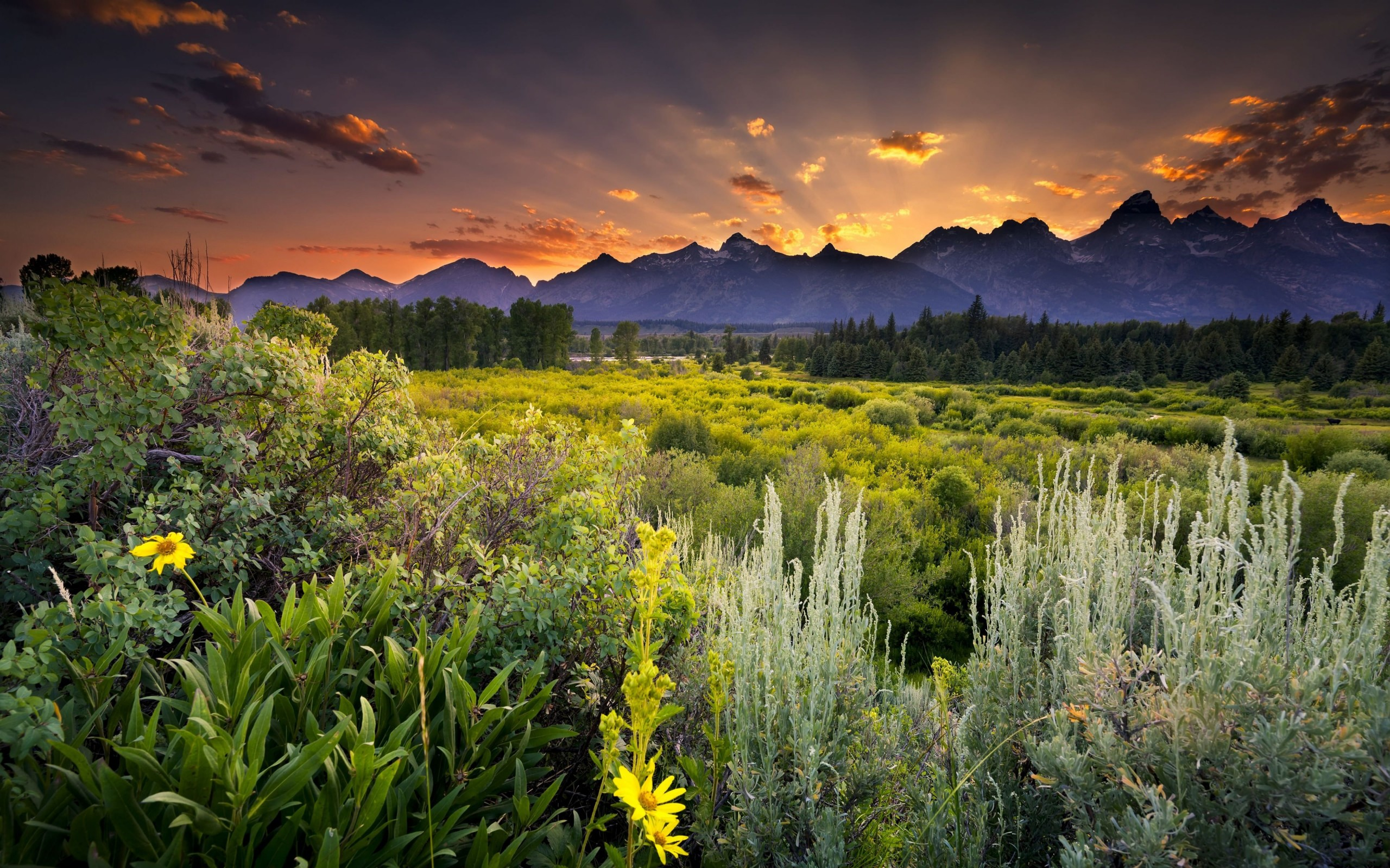 Sunset in Grand Teton National Park Wallpaper for Desktop 2560x1600