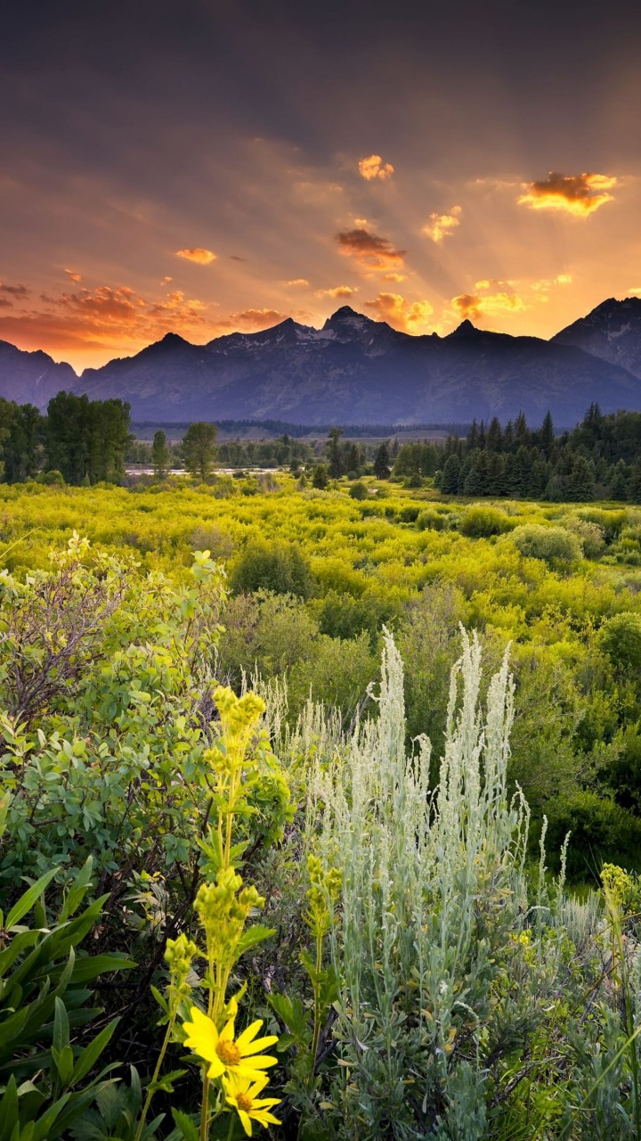 Sunset in Grand Teton National Park Wallpaper for Google Galaxy Nexus