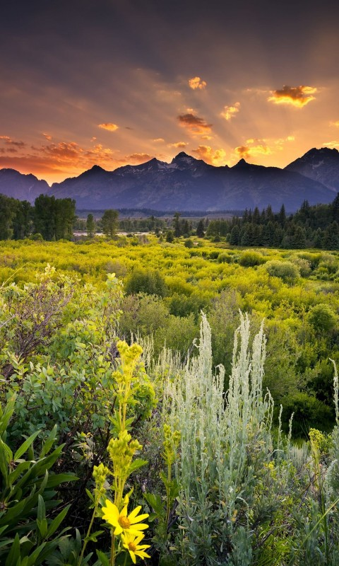 Sunset in Grand Teton National Park Wallpaper for HTC Desire HD