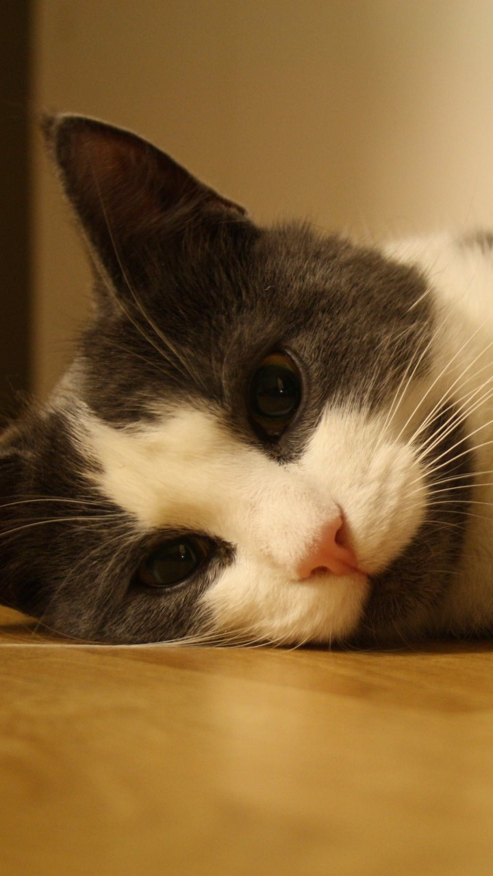 Sweet Cat Lying On The Floor Wallpaper for SAMSUNG Galaxy S3