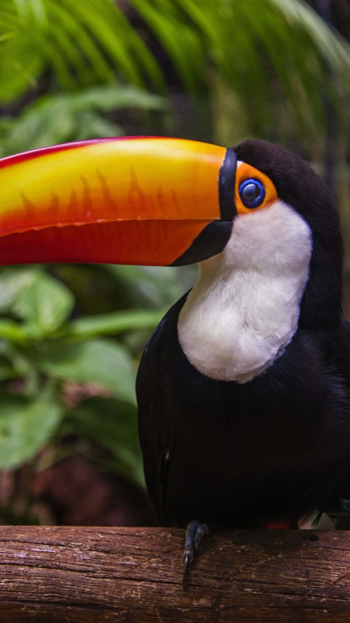 Toucan Wallpaper for HTC One mini