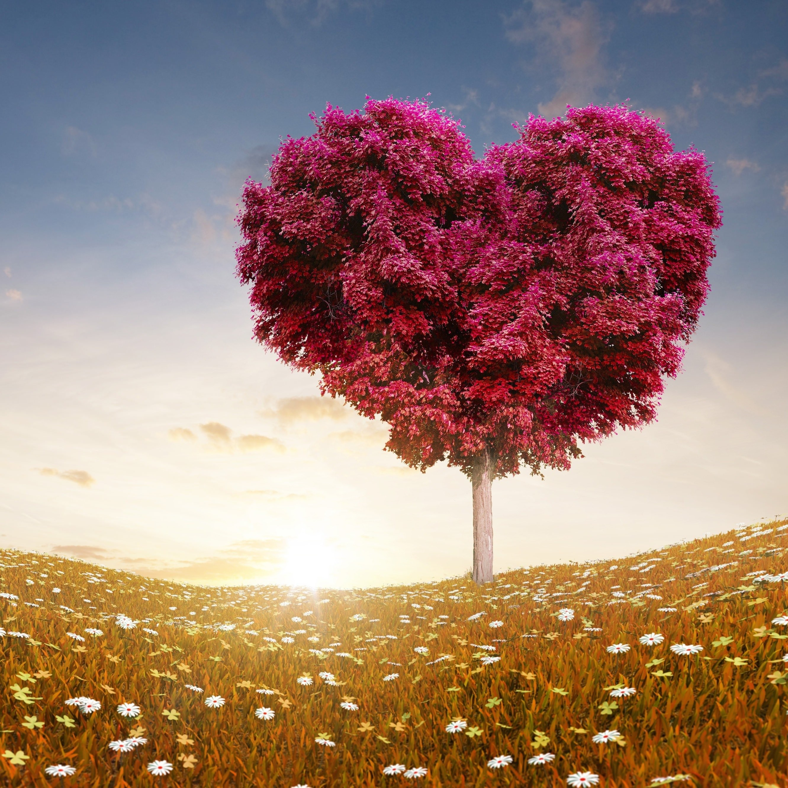 Love Wallpaper Iphone 6 Plus : Download Tree Of Love HD wallpaper for iPhone 6 Plus ...