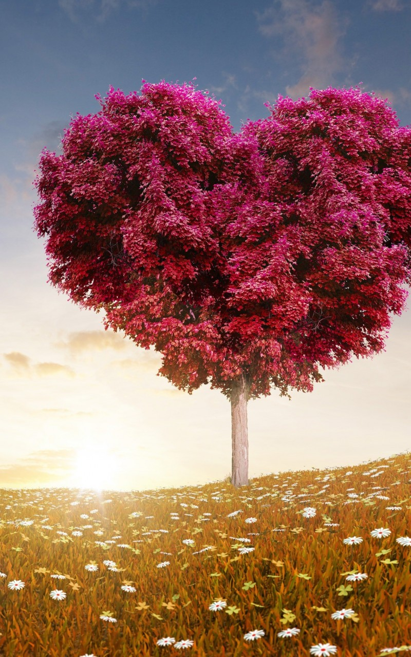 Tree Of Love Wallpaper for Amazon Kindle Fire HD
