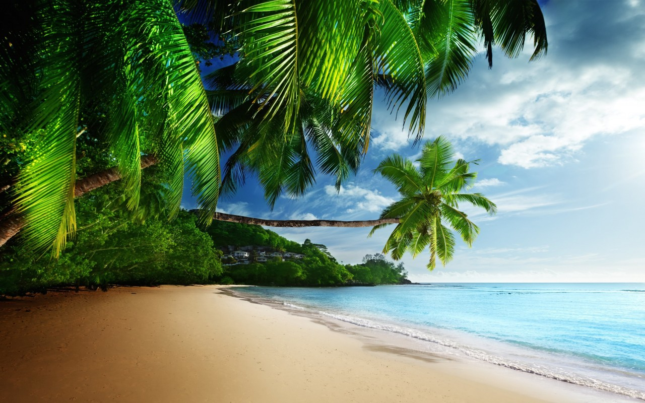 Tropical Paradise Beach Wallpaper for Desktop 1280x800