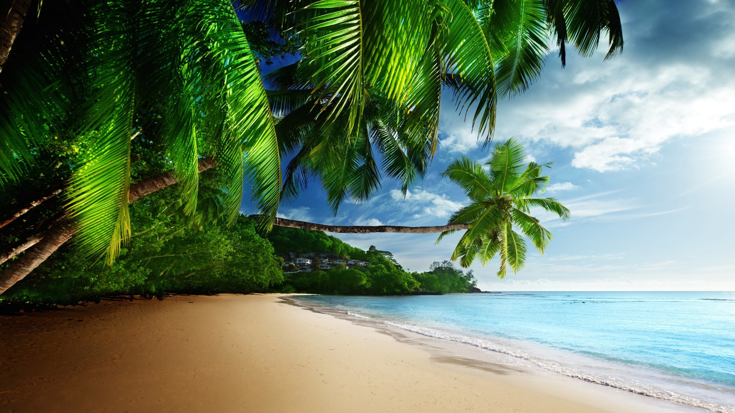 Tropical Paradise Beach Wallpaper for Social Media YouTube Channel Art