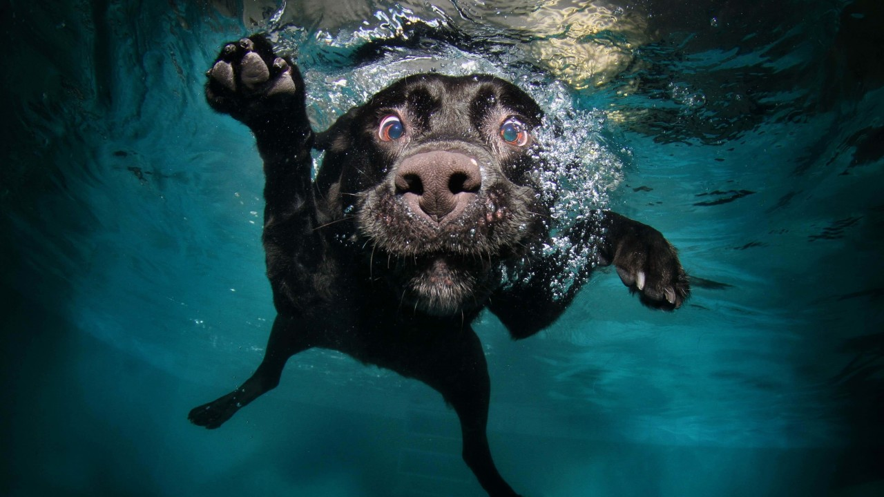 Underwater Dog Wallpaper for Desktop 1280x720