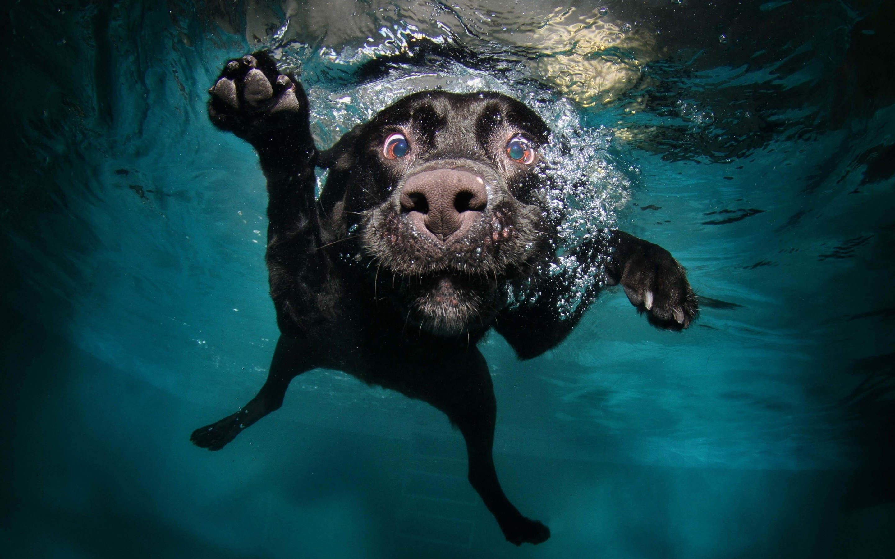 Underwater Dog Wallpaper for Desktop 2880x1800