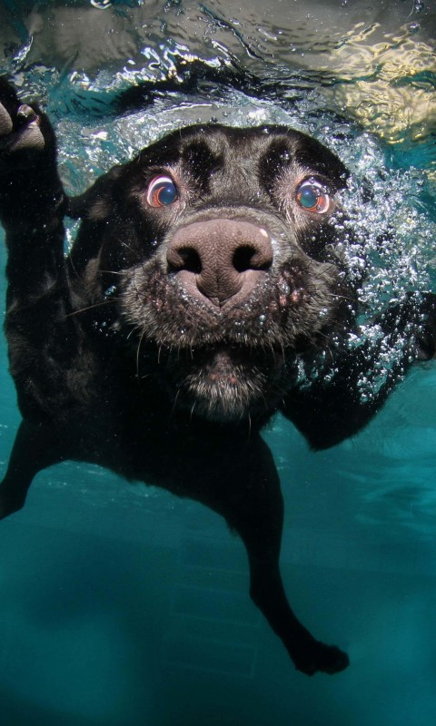 Underwater Dog Wallpaper for SAMSUNG Galaxy S3 Mini