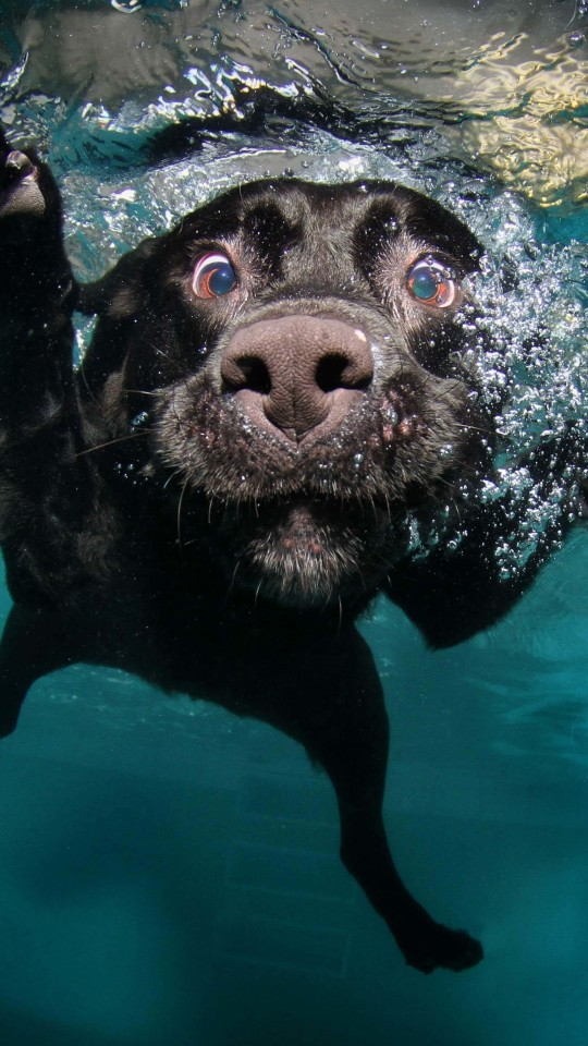 Underwater Dog Wallpaper for SAMSUNG Galaxy S4 Mini