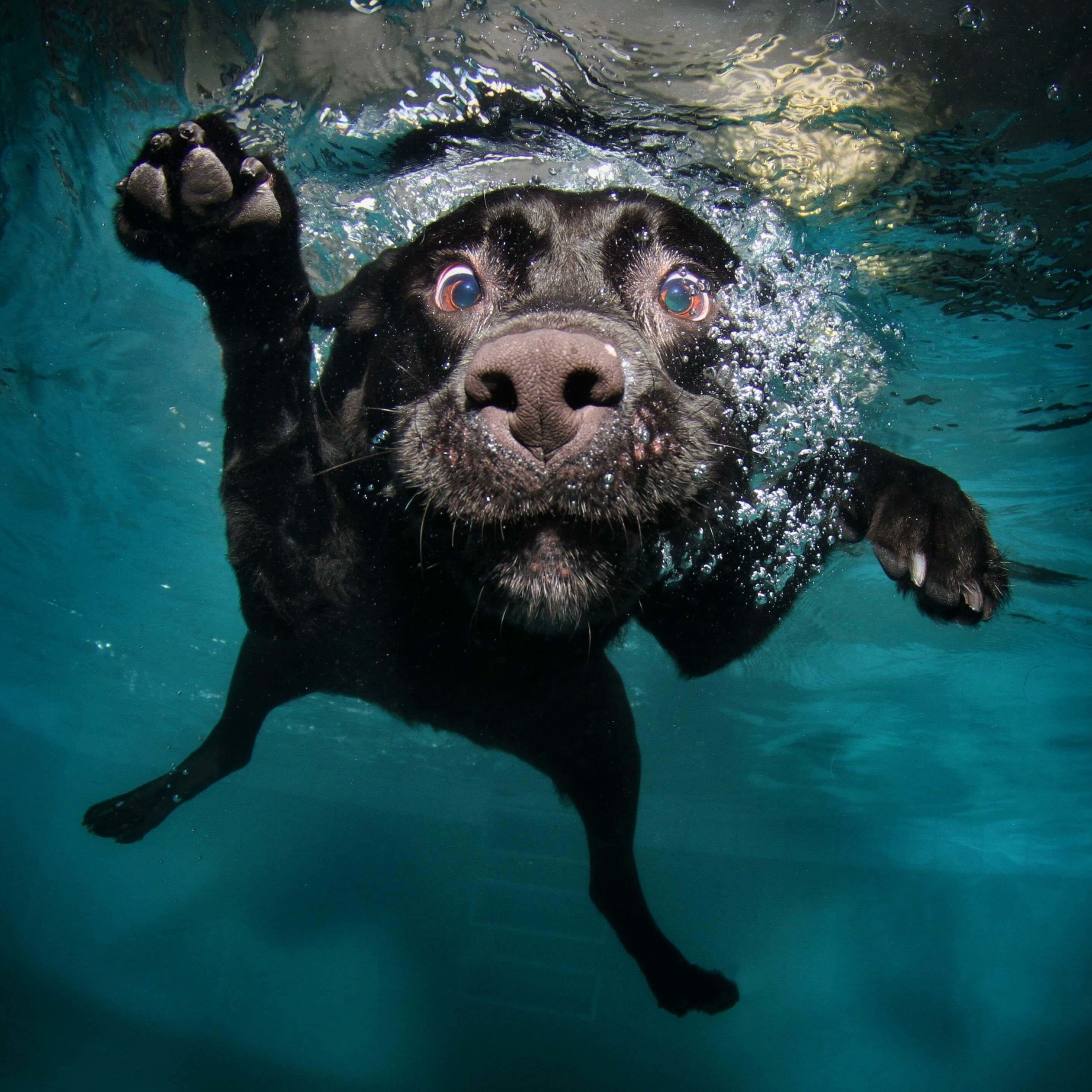 Underwater Dog Wallpaper for Apple iPad 4